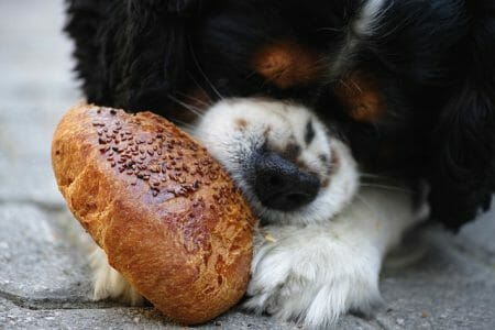 What should you feed your dog with food allergies?