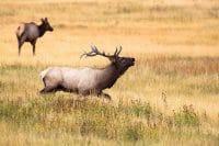 6 Essential Deer Hunting Tips for Beginners